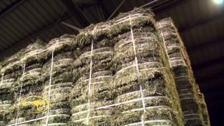 getlinkyoutube.com-Clinton Anderson Visits Standlee Hay Company