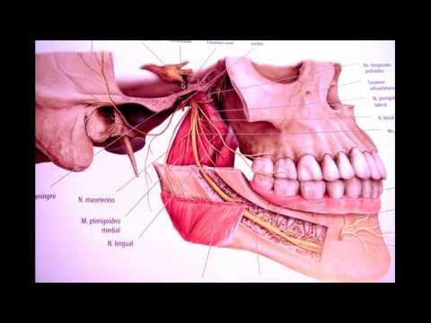 Trigemino parte 2  Logia de la Facultad de Odontologia Large