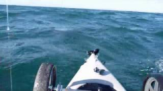 getlinkyoutube.com-Kayak Fisherman vs Great White Shark