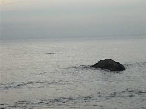 makhluk aneh dalam laut