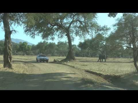 06102013 ELEPHANT AND CAR CLOSE BY YOU TUBE4