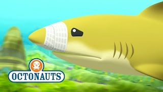 getlinkyoutube.com-Octonauts: Lemon Shark Rescue
