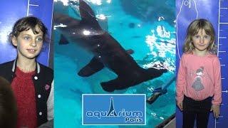 getlinkyoutube.com-VLOG • ON NOURRIT les REQUINS à l'Aquarium de Paris (part 1) ft. Hugo - Studio Bubble Tea