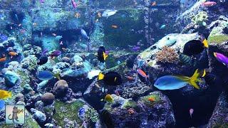 getlinkyoutube.com-3 HOURS of Beautiful Coral Reef Fish, Relaxing Ocean Fish, Aquarium Fish Tank & Relax Music 1080p HD
