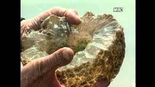 getlinkyoutube.com-[극혐주의] 댐에 사는 웬 괴생물체 ㄷㄷㄷ