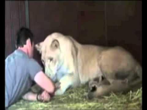 Ahirzamanın bir alameti: hayvanlarla insanların dostluğu