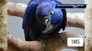getlinkyoutube.com-أغلى 10 حيوانات أليفة في العالم ✔