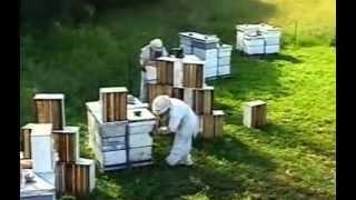 getlinkyoutube.com-Пчеловодство в Канаде