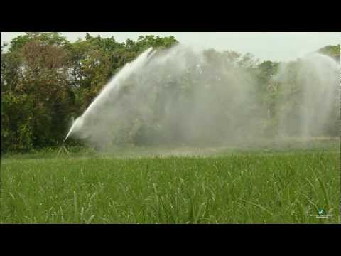 Nelson Irrigation's Big Gun On Sugarcane In Central America