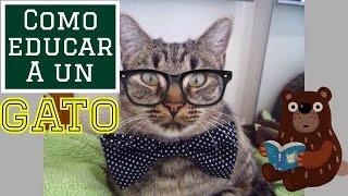 getlinkyoutube.com-Como Educar a un Gato