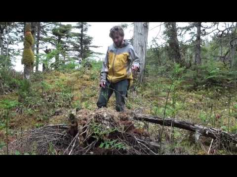 In the field with B.C. bear biologists