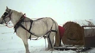 getlinkyoutube.com-Montana style hay hauling.AVI