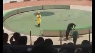 getlinkyoutube.com-شاهد الدب الاسود لحظة افتراس القرد خلال عرض السيرك