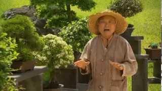 getlinkyoutube.com-The Garden Gurus - Becoming a Bonsai Master