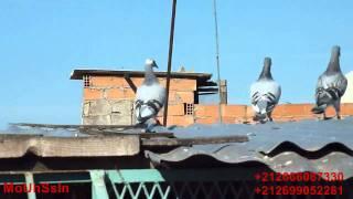 getlinkyoutube.com-pigeon de Jamal 1