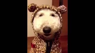 getlinkyoutube.com-関西弁をしゃべる犬。