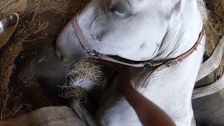 getlinkyoutube.com-GoPro Awards: Freedom The Horse is Liberated