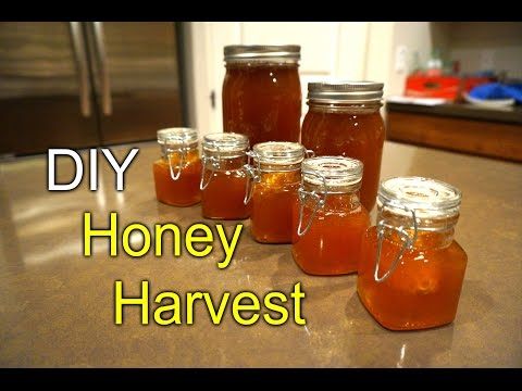 TopBar bee hive honey harvest - first time How to