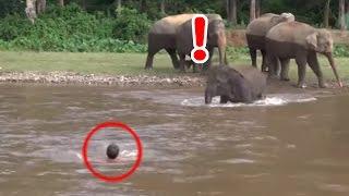 getlinkyoutube.com-感動 ゾウの恩返し 溺れる男性の救助へ向かう赤ちゃんゾウ