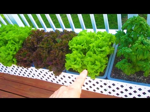 Container Garden Update 1 Harvest Layout Varieties Organic Raw Food Vegetable Gardening How to Grow