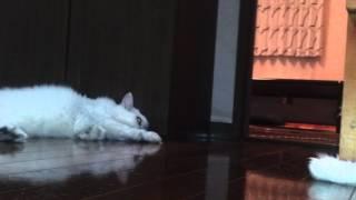 getlinkyoutube.com-毒殺された猫?!