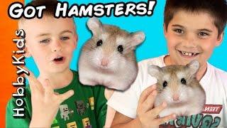 getlinkyoutube.com-HobbyKids Buy REAL Hamsters! Escaped Pets at Home + Petco Toy Shopping Haul HobbyKidsTV