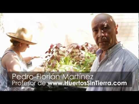 Huerto hidropónico de plantas medicinales
