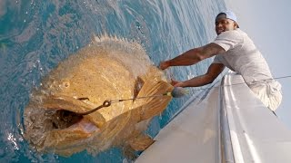 getlinkyoutube.com-Monster Goliath Groupers with NFL Linebacker Sam Barrington - 4K