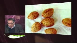 getlinkyoutube.com-ΑΕΙΦΟΡΙΑ Αμυγδαλιά-Amygdalus communis-almonds