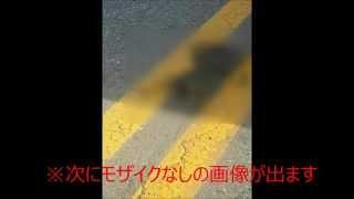 【閲覧注意】韓国で道路にネコが舗装される