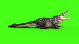 getlinkyoutube.com-Green Screen Alligator Crocodile Reptile Attack - Footage PixelBoom