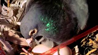 getlinkyoutube.com-Brilliant Beasts Pigeon Genius (National Geographic)