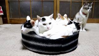 満員な猫ベット Cat Bed 170120