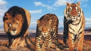 Лев, Пантера, Ягуар против Крокодилов. Подборка.