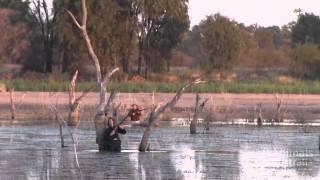 getlinkyoutube.com-Duck Shooting Cruelty Exposed