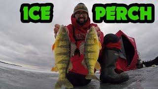 getlinkyoutube.com-Early Ice - Perch Fishing on Lake Simcoe 2016