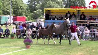 getlinkyoutube.com-Holsteiner Pferdetage 2014 - Impressionen