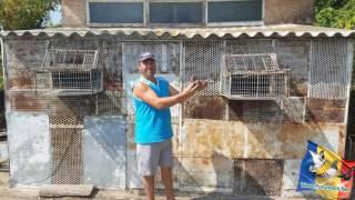 getlinkyoutube.com-Loc 2 Barcelona International 2016 pe Romania Crescatorul Cirtoc Radu judetul Arges Iulian