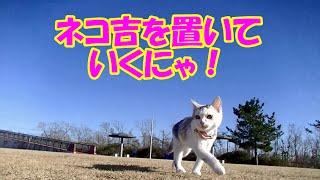 getlinkyoutube.com-【ネコ吉未公開映像】パパを見失って探し回る猫 その2