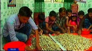 getlinkyoutube.com-koel pakhi Chash, Norshingdi,Maasranga TV News, Report   Badrul Amin ChoudhuriG Collected by Jahangi