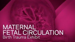 getlinkyoutube.com-Maternal Fetal Circulation - Birth Trauma Animation