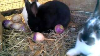 getlinkyoutube.com-Feed for meat rabbits. What I feed & why.