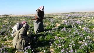 getlinkyoutube.com-مقناص العراق 2014 علي الحريص ولافي الحريص 3