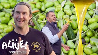 Brad Makes Olive Oil (In Italy!) | It's Alive | Bon Appétit