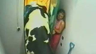 Big Brother Crazy Cow very funny no xxx