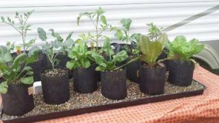 """getlinkyoutube.com-Incredible Automatic Self Watering Grow Bag Garden System """"Plant it and Forget It"""""""