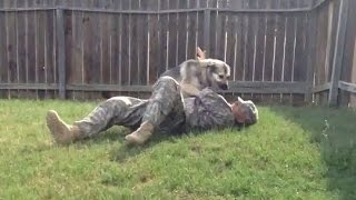 getlinkyoutube.com-Dogs Welcoming Soldiers Home Compilation 2016 [NEW]