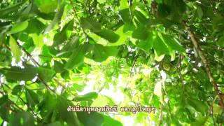 getlinkyoutube.com-รายการทุ่งแสงตะวัน ตอน ส้มควาย