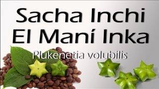 ACEITE DE SACHA INCHI - BENEFICIOS Y CARACERISTICAS