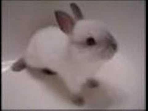 Description: Cute videos of Rabbits and Bunnies